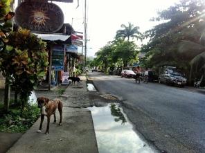 Rush hour in Puerto Viejo