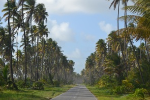 Cruising the coconut palm forest